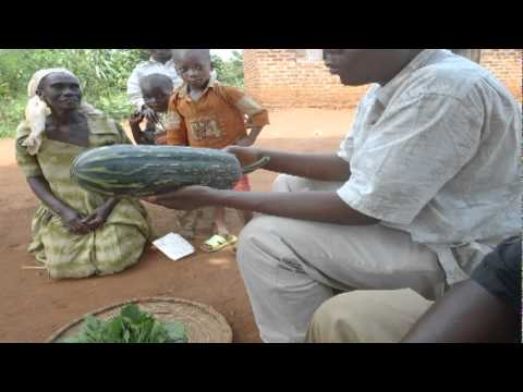 KACOBA HEN FRAME WORK VIDEO INTERPRETATION.mpg