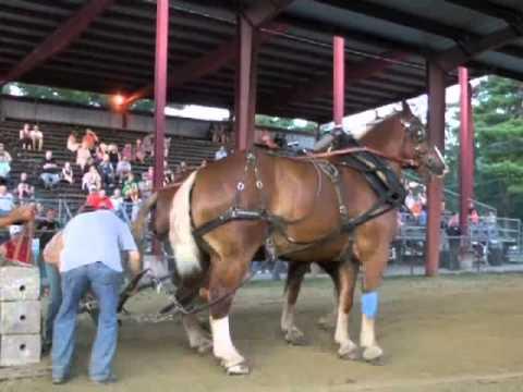 Acton Fair Livestock - 2012