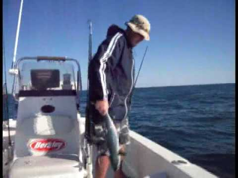 Wrightsville Beach Fishing, False Albacore Video