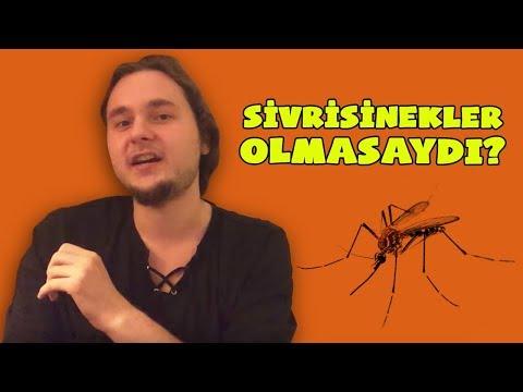 Dünyadaki Tüm Sivrisinekleri Öldürürsek Ne Olur?