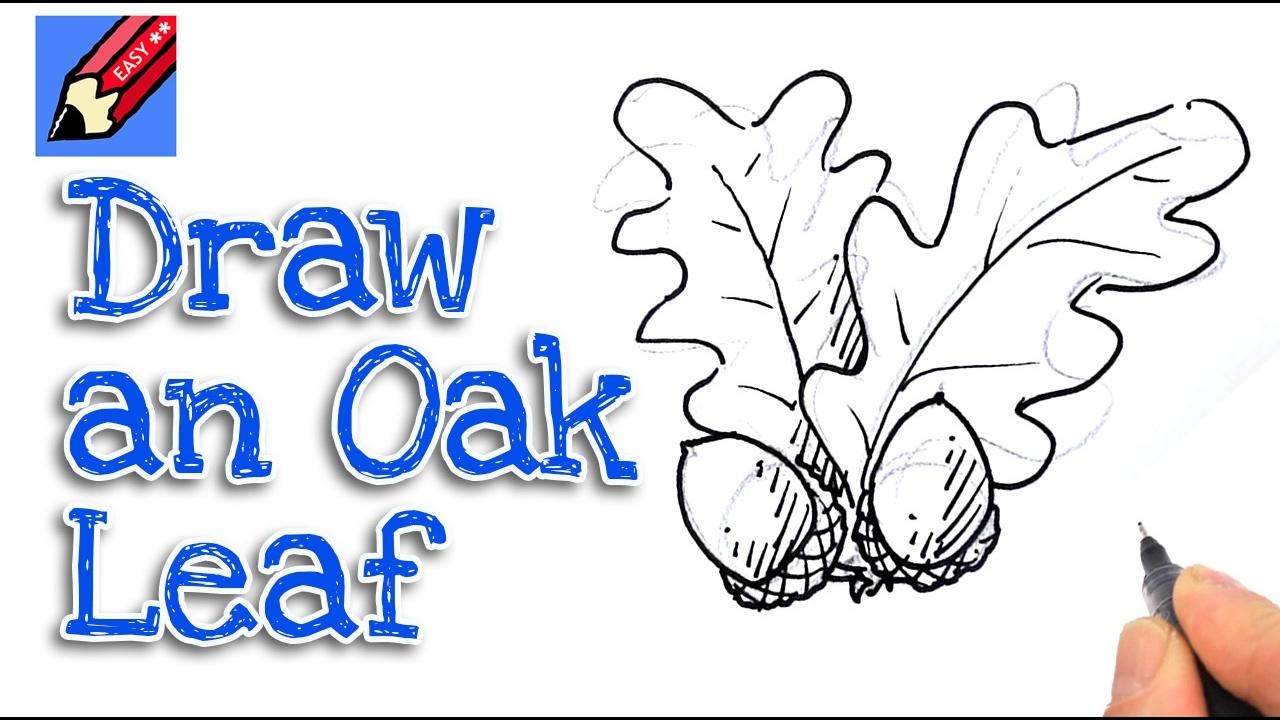Acorn Tree Drawing How to Draw Acorns Oak