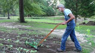 High Arch Wheel Hoe | Plowing OKRA | Hoss Tools