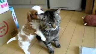 Puppy loves kitty!