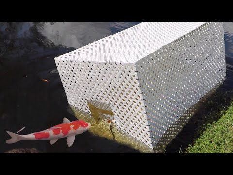 GIANT FISH-TRAP CATCHES MASSIVE COLORFUL FISH!!