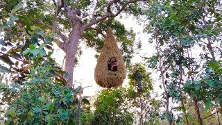 Building the beautiful big bird nest house on the tree