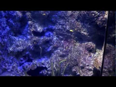 Marine Life Park Aquarium, Sentosa, Singapore