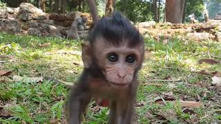 Doing baby monkey, What baby monkey doing with it's sister?