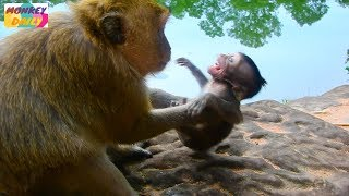 My God! Brinn mom catch Bree throw down on rock | Poor Bree scare mom very much | Monkey Daily 1509