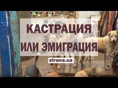 Кастрация или эмиграция. Что означает законопроект об обязательном учете котов и собак | Страна.ua