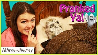 Family Fun Halloween Pranks! / AllAroundAudrey