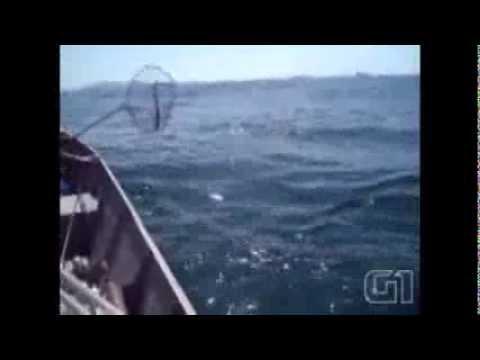 Filhote de golfinho é resgatado por pescadores e 'agradece' com salto