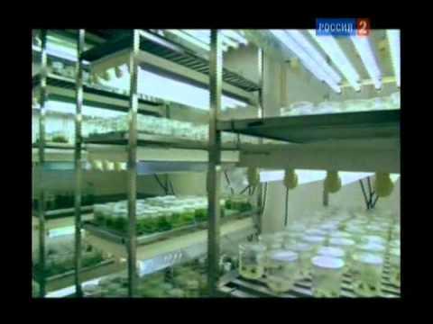 ГМО. (. Биоинженерия. Овощи в мегаполисе)