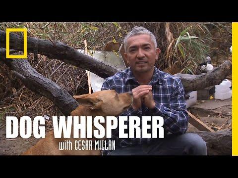 Homeless Hound   Dog Whisperer