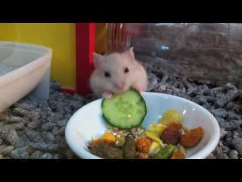 Dog Eating Cucumber Video