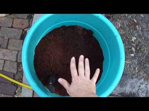 Coir for Soil vs coco