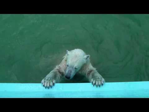 キロル カメラにジャンプ おびひろ動物園*イコロとキロル(20100717)
