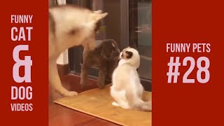 Funny Cats and Dogs Compiation 28 | Vines 2018