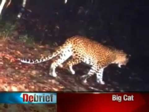 Sri Lanka's Psychopathic Wild Life Researchers Let Leopards Feed On Humans