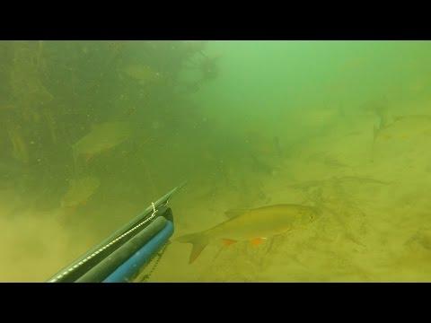 голавль подводное видео