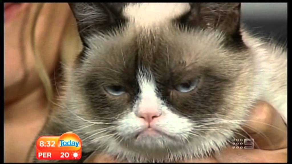 Today Cat Grumpy Cat on Today Show