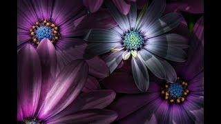 CREATIVE FLOWER PHOTOGRAPHY - Spotlighting Flowers In Lightroom