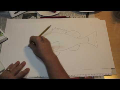 How to Draw a Fish the easy way - Nassau Grouper