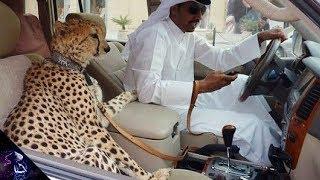 ये अजीब चीज़ें सिर्फ आपको दुबई में मिलेंगी    Weird Things you will only see in Dubai Hindi