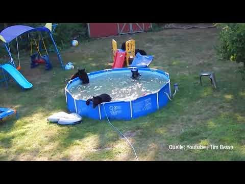 Unerwartete Gäste im Garten-Pool