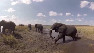 360 Video on Chobe River - Botswana