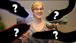 The Top 5 BEST Intermediate Snakes!