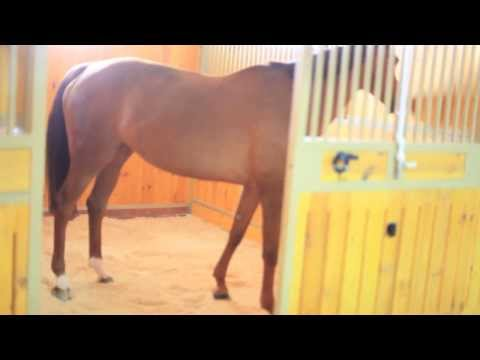 Подстилка для лошадей Horse Master из древесных гранул.