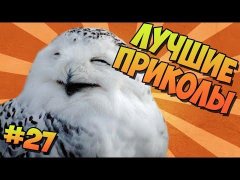 ЛУЧШИЕ ПРИКОЛЫ #27 СОВЫ ТАНЦУЮТ