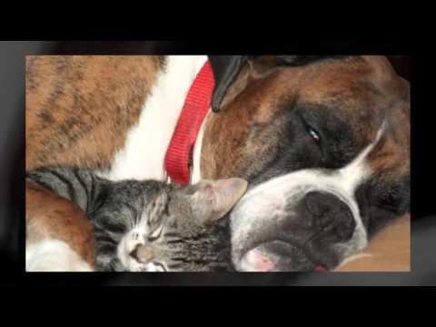 Нежно обниму любя !