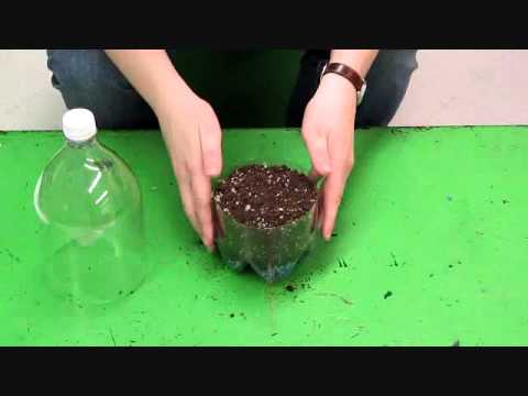 How to Build a Pop Bottle Terrarium