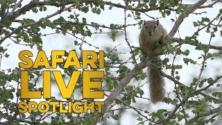 sL Stories: safariLIVE Viewer Pradeep On Squirrel Appreciation Day!
