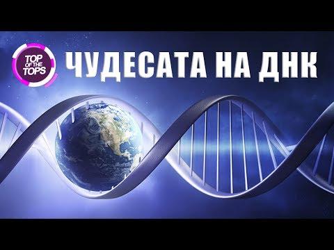 Топ 10 удивителни факта за ДНК