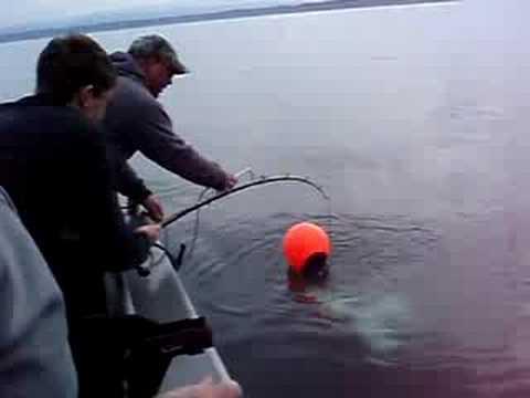 180 Pound Alaskan Halibut Catch
