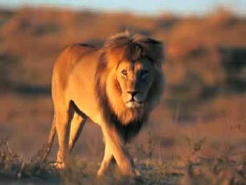 Веня Дркин - Тень Желтого Льва