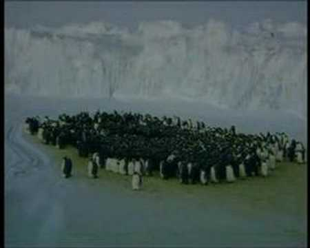 Emperor Penguin -- Long Winter Wait