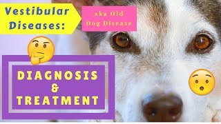 Vestibular Diseases (Old Dog Disease): Diagnosis and Treatment