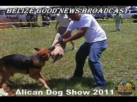 Alican Dog Show (Belize)
