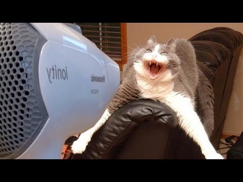 Dogs and cats hate hair dryers - Funny animal compilation