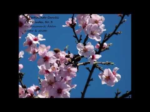 Фердинандо Карулли - Opus 114 Prelude No 3