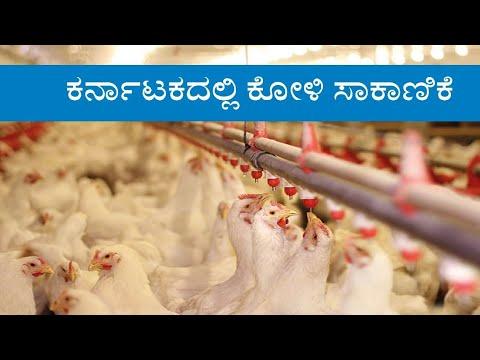 Poultry Farming in Karnataka - Kannada