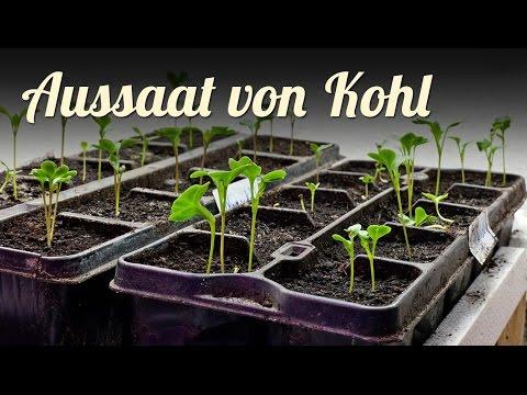 Winter | Jungpflanzenanzucht | Aussaat Von Kohlrabi, Blumenkohl, Spitzkohl Und Eissalat, GARTEN