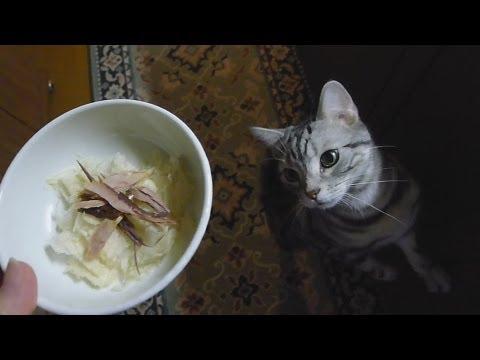 わしゃわしゃ食べる猫 - Midnight snack thyme.