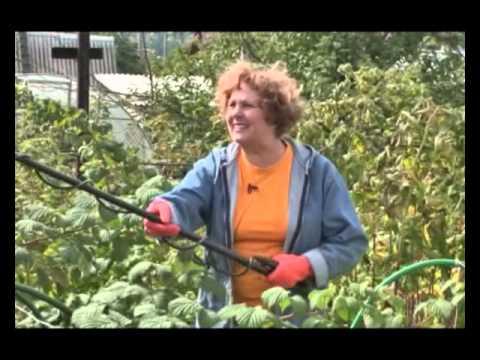 Защита сада от вредителей, опрыскивание и обработка от А до Я – календарь-памятка