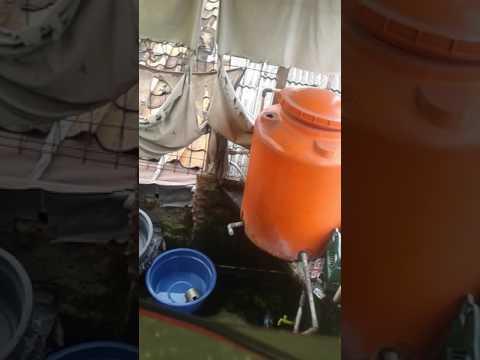 Ngintip tetangga mandi semok banget thumbnail