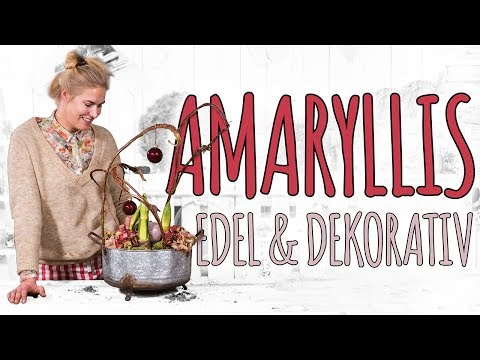 Amaryllis Einfach & Dekorativ - DIY