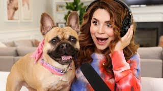 My Dog Eats Everything! ASMR